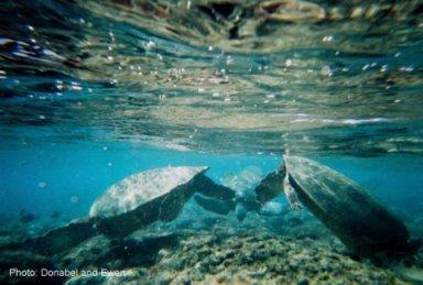 Photo property of kauai-vacations-with-kids.com